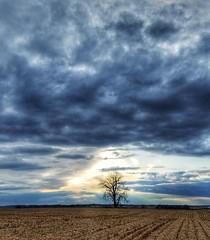 enlightenment..... (BillsExplorations) Tags: sunset clouds sky harvest field tree enlightenment darkskies fall autumn country rural