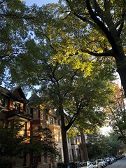Houses and trees, November morning on Church Street NW, Washington, D.C. (Paul McClure DC) Tags: washingtondc districtofcolumbia nov2019 tree autumn historic architecture dupontcircle