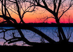 Good Morning, Trees (John Westrock) Tags: autumn canon135mmf2lusm canoneos5dmarkiv fall johnwestrock lakemonona madison midwest morning nature nopeople outdoors silhouettes sky sunrise trees wisconsin yaharaplacepark