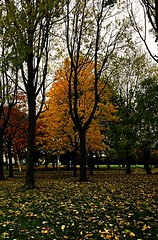 Autumn leaves (BrooksieC) Tags: autumn trees leaves gold brown park ireland belfast northernireland