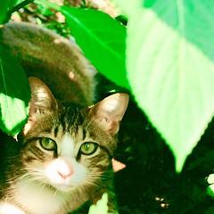 She found me in the park. #cat #猫 #ネコ #ねこ #野良猫 #alleycat #Straycat #流浪猫 #Gatocallejero #Chaterrant #????? #Katze #chat #gatto #gato #feles #кошка #KAT #gato #??? #ko?ka #kass #муур #pisic? #Tokyo #日本 #東京 #japan
