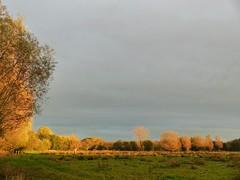 Evening Sun (Marit Buelens) Tags: belgium belgië westvlaanderen flanders leplatpays nature reserve naturereserve gemeneweidebeek bruges brugge assebroek sintkruis sky lucht clouds wolken trees grass bomen pollardwillow knotwilg eveningsun