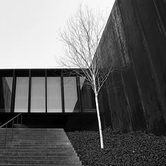 STF_DSF0219 (essepe) Tags: architecture beton escalier essepe metal square urbain vegetal verre