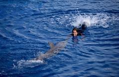 LA SIRENA QUE JUBABA CON LOS DELFINES (marthinotf) Tags: delfinesacuario agua juegosenelagua valencia risas alegria natacion