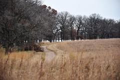 Hiking at Crane Meadows National Wildlife Refuge (U.S. Fish and Wildlife Service - Midwest Region) Tags: cranemeadows nwr refuge nationalwildliferefuge minnesota mn fall november 2019 landscape oak tree trail hiking