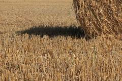 A l'ombre de la paille (Pi-F) Tags: moisson paille été bretagne france or doré soleil ombre campagne