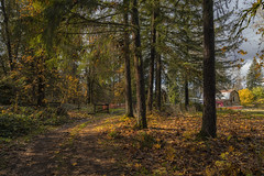 The old homestead (charhedman) Tags: pittmeadows barn light trees autumn autumnleaves driveway gate scenic