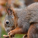 Squirrel 191105 029.jpg