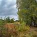 November heath