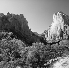 Down in the Valley (Tim Roper) Tags: landscape mamiya6 film hc110 hp5 zion ilford blackandwhite medium format 6x6