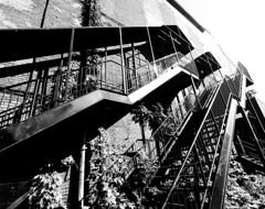 Foufounes back steps (Montreal) (MassiveKontent) Tags: montreal bw contrast city monochrome urban blackandwhite streetphoto metropolis montréal quebec photography bwphotography streetshot architecture shadows noiretblanc blancoynegro building perspective absoluteblackandwhite mono stairs steps