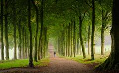 Foto (teun_van_dijk) Tags: flickrbende mariëndaal laantje lane nature tree trees landscape walking sundaymorning autumn green colors beauty beautiful teunvandijk travel movement people