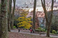 El otoño-_DSC3806 (peruchojr) Tags: otoño atardecer parque árbol gente hojas castrelos quiñonesdeleón vigo galicia españa
