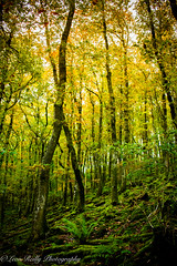 Exmoor wood in Autumn (broadswordcallingdannyboy) Tags: autumn fall mood light devon westcountry gardens leonreillyphotography copyright donotcopy eos7d canon leonreilly eflens exmoor somerset wood forest colour green foliage trees 24mm