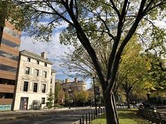 Trees and roadway at Dupont Circle NW, autumn, Washington, D.C. (Paul McClure DC) Tags: washingtondc districtofcolumbia nov2019 dupontcircle tree historic architecture