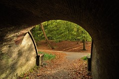 Walking to the light (wilma HW61) Tags: tunnel doorkijk vediattraverso voiràtravers seethrough perspective perspectief licht light schaduw shade schatten shadow ombra lombre herfst herbst autumn automne autunno fall najaar engelsewerk zwolle overijssel nederland niederlande netherlands nikond90 holland holanda paysbas paesibassi paísesbajos europa europe pov compositie composition wilmahw61 wilmawesterhoud