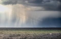 Heavy Rain Front (ak | Lenswork) Tags: water rain clouds ocean sea baltic light drama nature landscape seascape landschaft landschaftsfotografie ostsee regenfront schwan sturmfront dramatisch wasser vogel meer dramatic weather unwetter