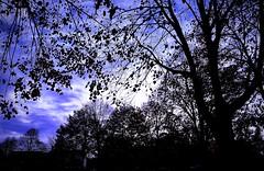blue autumn sky (delnaet) Tags: lucht himmel sky blue blauw autumn herfst bleu fantasticnature