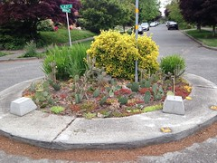 Traffic Circle - makes a point (Seattle Department of Transportation) Tags: seattle sdot transportation donghochang traffic circle plants cactus 43rd sunnyside