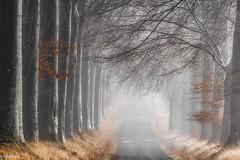 23122016-DSC_0013 (vidjanma) Tags: recogne allée arbres automne brume hêtres