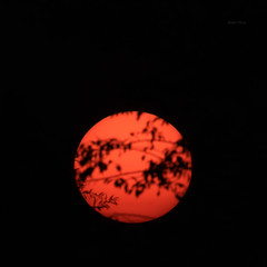 Sun-shy (Robyn Hooz) Tags: sole sun rami orange disk disco branches sunrise alba sorgere padova
