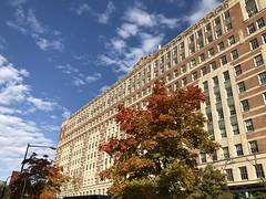 Fall color at Steptoe & Johnson Building, 19th Street NW, Washington, D.C. (Paul McClure DC) Tags: washingtondc districtofcolumbia nov2019 tree autumn dupontcircle historic architecture