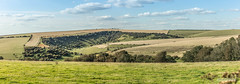 Coombe south of the scarp-slope of the South Downs, above the village of Ditchling and just west of Ditchling Beacon, in panorama. (Scotland by NJC.) Tags: hill تَلّ colina 小山 brdo kopec bakke forhøjning landskabet heuvel mäki colline hügel λόφοσ collina 丘 언덕 ås wzgórze deal холм backe เขาเตี้ยๆ tepe coğrafya пагорб đồi landscape scenery countryside scene setting background panorama view topography geography terrain environment landskab landschap paisaje maisema paysage landschaft peaceful calm still quiet serene undisturbed gentle pleasant soothing tranquil placid restful pacífico 和平的 miran fredelig vredig rauhallinen paisible friedlich ειρηνικόσ 平和な 평화로운 ditchlingbeacon eastsussex england
