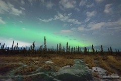 Glow Expanding (kevin-palmer) Tags: aurora auroraborealis northernlights geomagneticstorm green night sky stars space astronomy astrophotography glow fairbanks alaska october fall autumn nikond750 sigma14mmf18 borealforest nordaleroad clouds frozen ice wetland pond