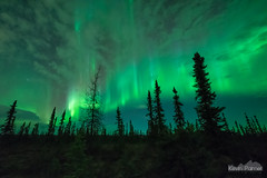 In the Boreal Forest (kevin-palmer) Tags: aurora auroraborealis northernlights geomagneticstorm green night sky stars space astronomy astrophotography glow bright fairbanks alaska october fall autumn nikond750 sigma14mmf18 borealforest nordaleroad clouds pillars