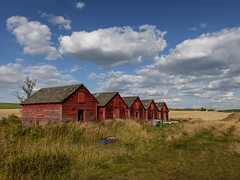 Memories of 'The Famous Five' (annkelliott) Tags: alberta canada swofcalgary scenery landscape countryside rural ruralscene field granaries five fiveinarow thefamousfive red old wooden colourful building shed farm farmland storage grass sky clouds outdoor summer 17september2015 panasonic lumix fz200 fz2003 annkelliott anneelliott ©anneelliott2015 ©allrightsreserved