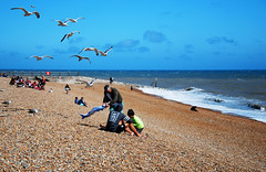 Let's have that picnic lads ... (neil mp) Tags: hastings sussex eastsussex coast walk 1066countrywalk beach englishchannel sea shingle gulls herringgulls mobbed picnic lunchtime