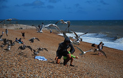 Dad! Where have you gone? (neil mp) Tags: hastings sussex eastsussex coast walk 1066countrywalk beach englishchannel sea shingle gulls herringgulls mobbed