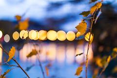 the blue shots (nicolasheinzelmann) Tags: marzilibrücke fluss aare ast äste blätter marzili blauestunde bluehour blue autumn fall herbst rainy regnerisch matte bern abend lichter licht stadt schweiz color colour farbe farbig canoneos5dmarkiv 5dmkiv 5dmiv canonef50mmf12lusm day dslr switzerland lights light urban 3november2019 november nicolasheinzelmann