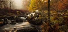 Autumn Flow (RD400e) Tags: canon eos 5dsr gitzo bwpolariser leefilters06hng longexposure autumn autumnal walking water rocks trees tree outdoors 2470l f28 mist flowing flow blakedean hardcastle crags