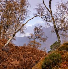 Through the Portal (Mitymous) Tags: fall2019 pines scotland simonbaxter torridon travel trees