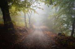 Walk. (darijan.mihajlovic) Tags: autumncolors foggyday mountain rajac serbia atmosphere forest photooftheday path intothewoods autumn fog woods