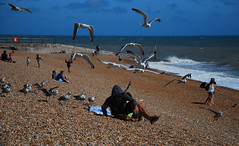 Time for a sharp exit (neil mp) Tags: hastings sussex eastsussex coast walk 1066countrywalk beach shingle sea englishchannel herringgulls mobbed