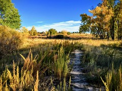 IMG_E3452 (wjaachau) Tags: cozy october autumnatmosphere autumnleaves autumncolors cherrycreekstatepark autumn park field evening nature landscape scenic scenery colorado