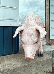 Oink, Oink (Jean S..) Tags: pig animal statue blue pink outdoors store boutique sky clouds