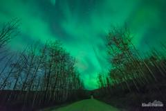Birch Road Aurora (kevin-palmer) Tags: aurora auroraborealis northernlights geomagneticstorm green night sky stars space astronomy astrophotography glow bright fairbanks alaska october fall autumn nikond750 sigma14mmf18 birch trees flickering