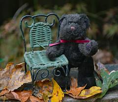 Hi Everybody! (BKHagar *Kim*) Tags: bkhagar teddy bear teddybear teddybeartuesday happyteddybeartuesday htbt leaves fall autumn chair wicker terry