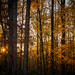 Fall Forest No.3