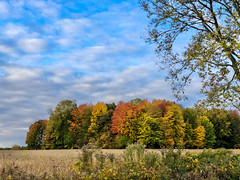 Autumn Arrives in Indiana (5) (tquist24) Tags: autumn color fall clouds geotagged nikon colorful outdoor farm cellphone indiana hdr nikond5300 trees sky tree rural landscape outside soybeans iphonex