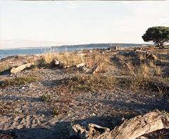 Point Hudson (Kent C.) Tags: porttownsend wa pygmyboats mamiyarb67pros film filmphotography kodakportra400 kodakfilm