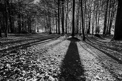 """In the beech forest • <a style=""""font-size:0.8em;"""" href=""""http://www.flickr.com/photos/126602711@N06/49022311976/"""" target=""""_blank"""">View on Flickr</a>"""