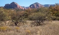 A view of the red rocks from Crescent Moon Ranch in Sedona, Arizona. (apardavila) Tags: arizona coconinonationalforest crescentmoonranch sedona desert redrock travel wanderlust