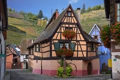 Niedermorschwihr (Alsace, F) (pietro68bleu) Tags: alsace hautrhin maisonsàcolombages vignoble automne géraniums
