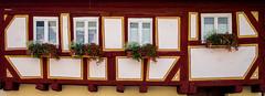 3 + 1 = 5 (TablinumCarlson) Tags: eu europa europe germany deutschland brd bayern bavaria franconia franken würzburg madonna maria jesus kirche church dof bokeh herzogenaurach erlangenhöchstadt mittelfranken leica m m240 summicron fachwerk fachwerkhaus timber framed framework fassade facade window fenster 28mm crop blumen flower 5