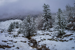 Bajo la niebla (SantiMB.Photos) Tags: 2blog 2tumblr 2ig conangles nieve snow otoño autumn bosque forest árboles trees niebla mist geo:lat=4262339550 geo:lon=076848250 geotagged senet cataluna españa