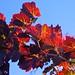 Taranto, vigna d'autunno